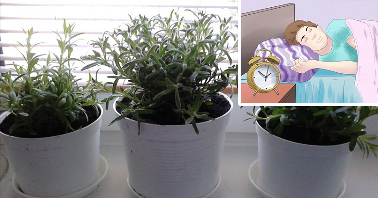 Coloque estas plantas no seu quarto elas purificam o ar e for Sono pour chambre